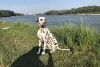 Mia sitz in der Sonne an der Donau