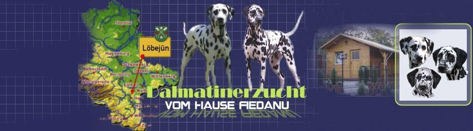 Dalmatinerzucht vom Hause Fiedanu